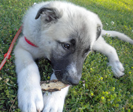 Indy the Mixed Breed Pictures 658677