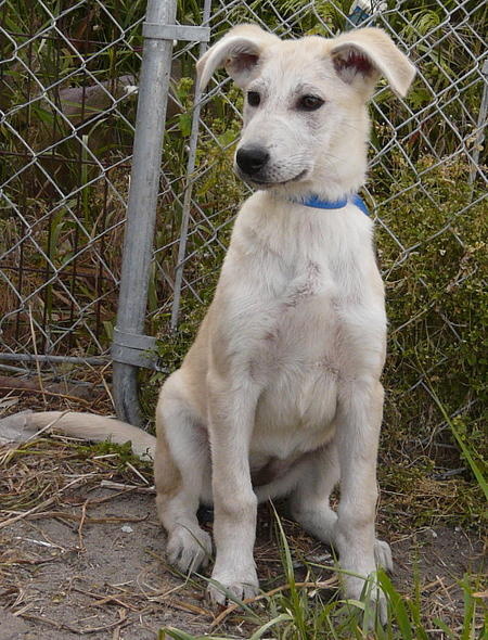 Ivory the Adoptable Mixed Breed Pictures 609925
