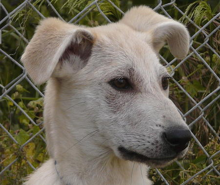 Ivory the Adoptable Mixed Breed Pictures 609927