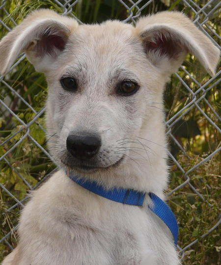 Ivory the Adoptable Mixed Breed Pictures 609928