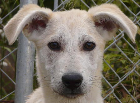 Ivory the Adoptable Mixed Breed Pictures 609929