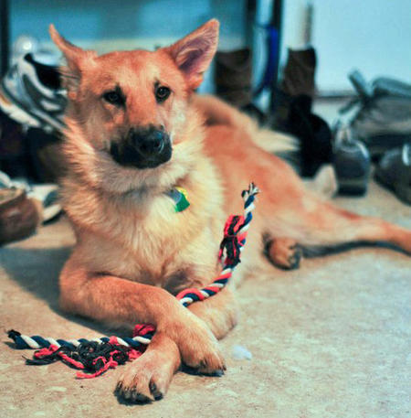 Jack the Canaan Dog Mix Pictures 789125