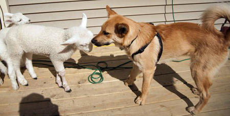 Jack the Canaan Dog Mix Pictures 789127