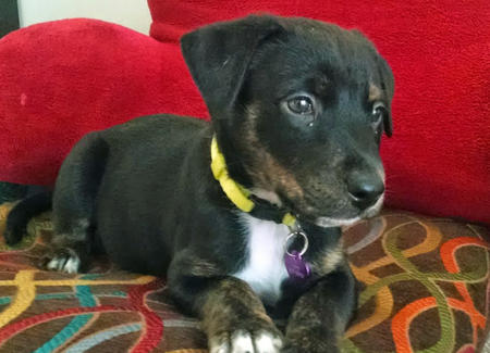 Jack the Mixed Breed Pictures 981728