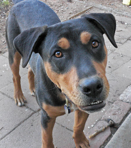 Jake the Mixed Breed Pictures 502419