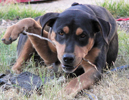 Jake the Mixed Breed Pictures 502422