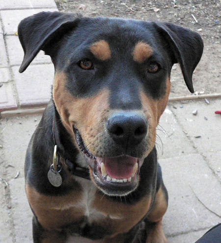Jake the Mixed Breed Pictures 502417