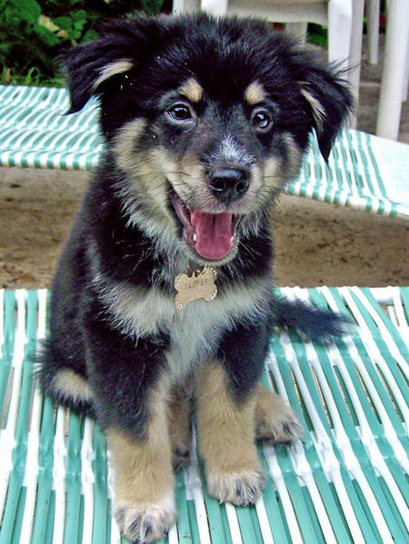 Jasper the Mixed Breed Pictures 483095