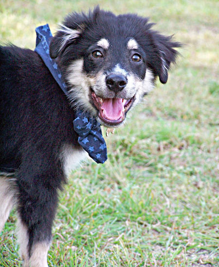 Jasper the Mixed Breed Pictures 483096