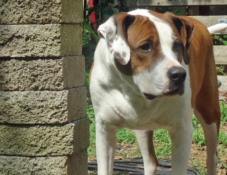 Jersey the Mixed Breed Pictures 802358