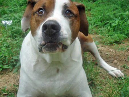 Jersey the Mixed Breed Pictures 802354
