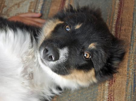 Jessie the Border Collie Pictures 856953