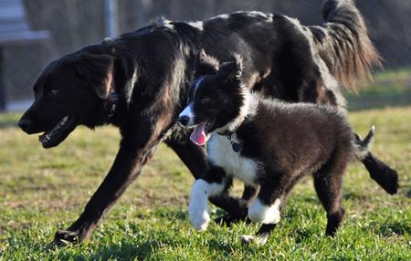 Jetson the Border Collie Pictures 711702