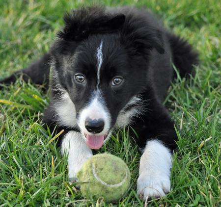 Jetson the Border Collie Pictures 711703