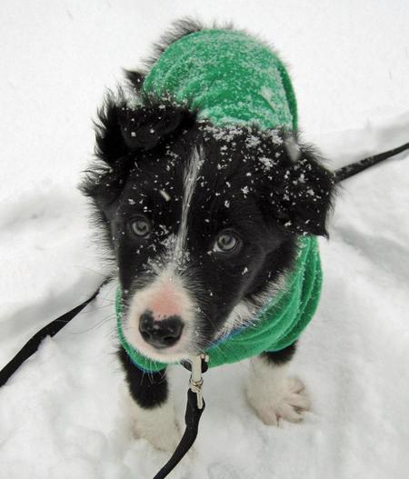 Jetson the Border Collie Pictures 711701