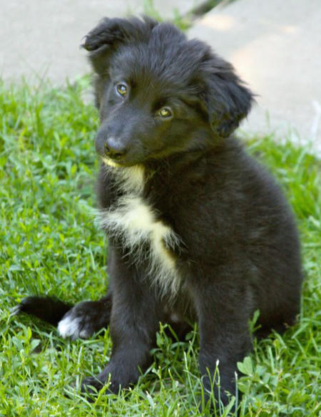 Karma the Border Collie Mix Pictures 905870