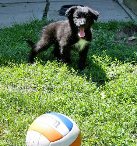Karma the Border Collie Mix Pictures 905872