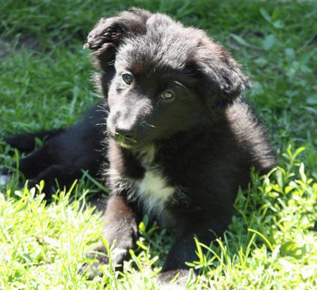 Karma the Border Collie Mix Pictures 905873