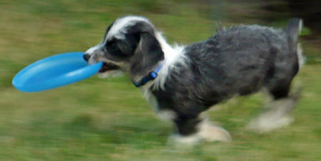 Katie the Terrier Mix Pictures 524071