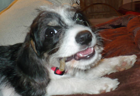 Katie the Terrier Mix Pictures 524072