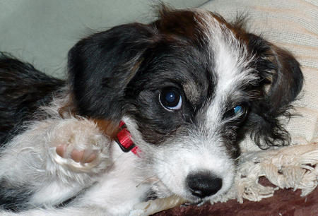 Katie the Terrier Mix Pictures 524069