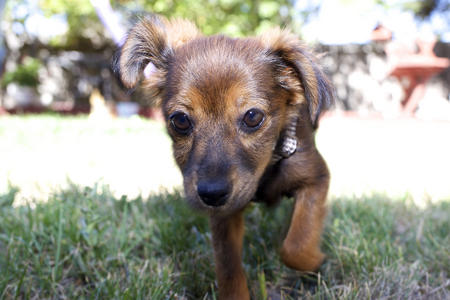 Kira the Mixed Breed Pictures 1018794