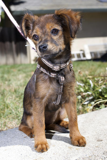 Kira the Mixed Breed Pictures 1018799