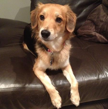 Kiwi the Beagle Mix Pictures 1047156