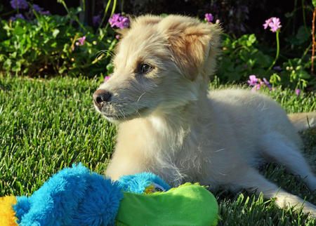 Koda the Mixed Breed Pictures 971747