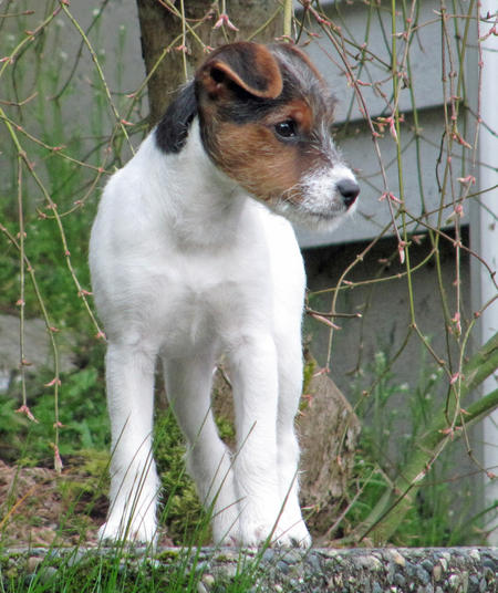 Kona the Jack Russell Terrier Pictures 769392