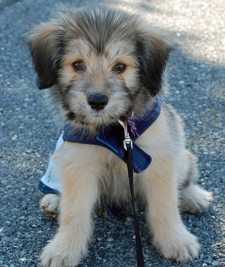 Leo the Mixed Breed Pictures 851808