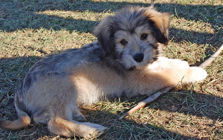 Leo the Mixed Breed Pictures 851811