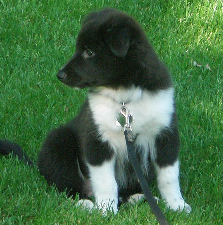 Lexi the Border Collie Mix Pictures 872512