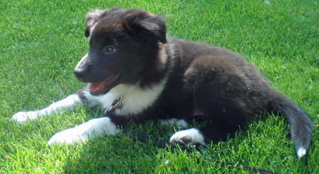 Lexi the Border Collie Mix Pictures 872515
