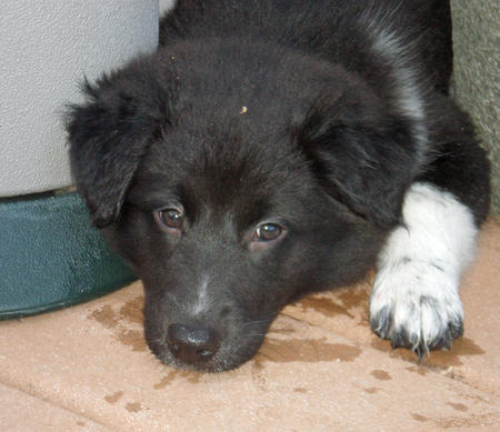 Lexi the Border Collie Mix Pictures 872516