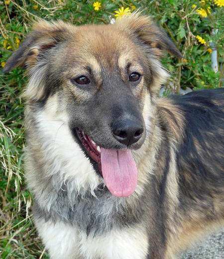Lila the Adoptable Mixed Breed Pictures 694102