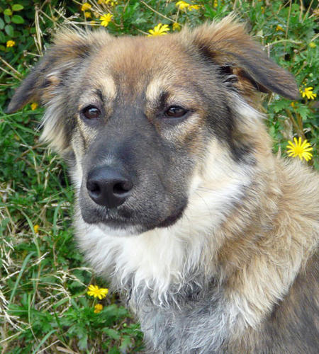 Lila the Adoptable Mixed Breed Pictures 694103
