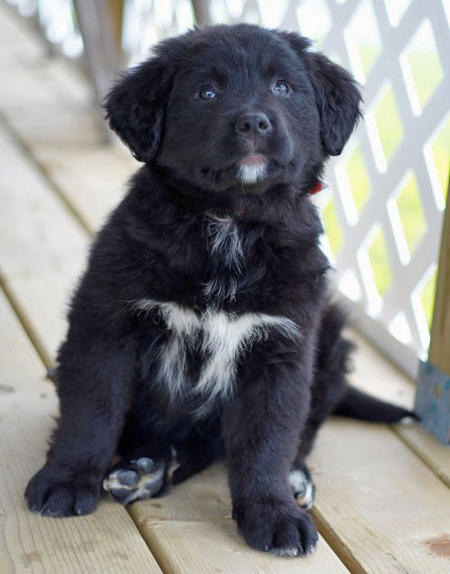Lilah the Border Collie Mix Pictures 744451