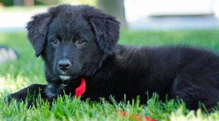Lilah the Border Collie Mix Pictures 744452