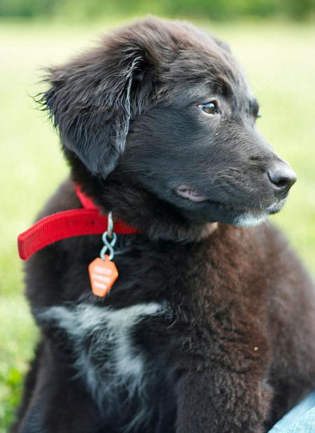 Lilah the Border Collie Mix Pictures 744457