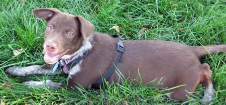 Lily Lu the Mixed Breed Pictures 847556