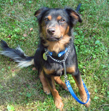 Logan the Mixed Breed  Pictures 1045423