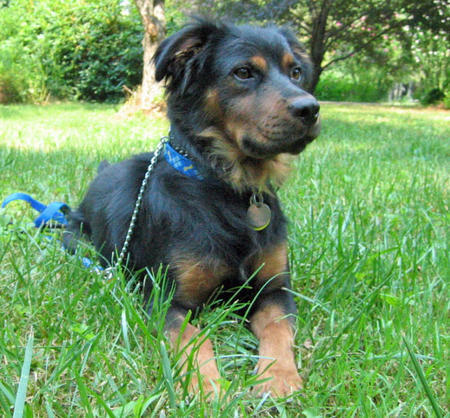 Logan the Mixed Breed  Pictures 1045425