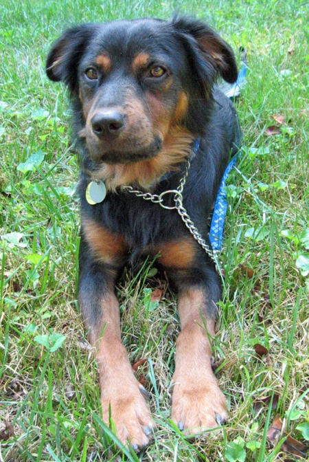 Logan the Mixed Breed  Pictures 1045426