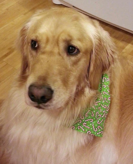 Lucy the Golden Retriever Pictures 936040