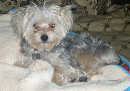 Lucy the Maltese Mix Pictures 918897