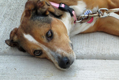 Macie the Mixed Breed Pictures 987054