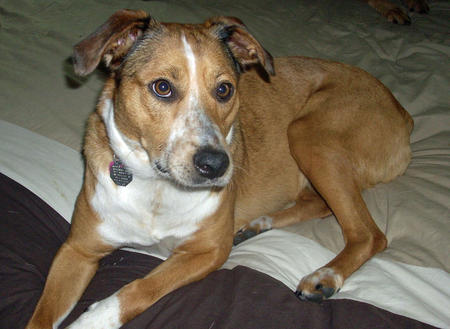 Macie the Mixed Breed Pictures 987051