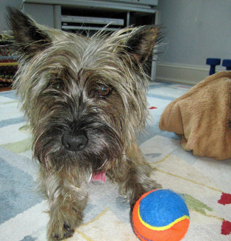 Maggie Mae the Cairn Terrier  Pictures 769575