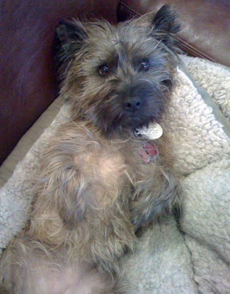 Maggie Mae the Cairn Terrier  Pictures 769574